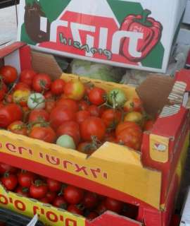 الاحتلال يتلف كميات من الخضار لمزارعين جنوب الخليل