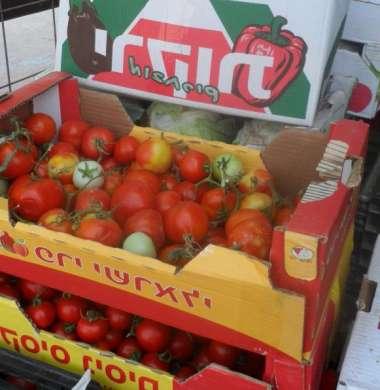 لهذا السبب .. مزارعو غزة يتوقفون عن تصدير منتجاتهم الزراعية