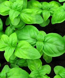 طبيب روسي يكشف عن نبات يساعد على استعادة حاسة الشم بعد الإصابة بكورونا
